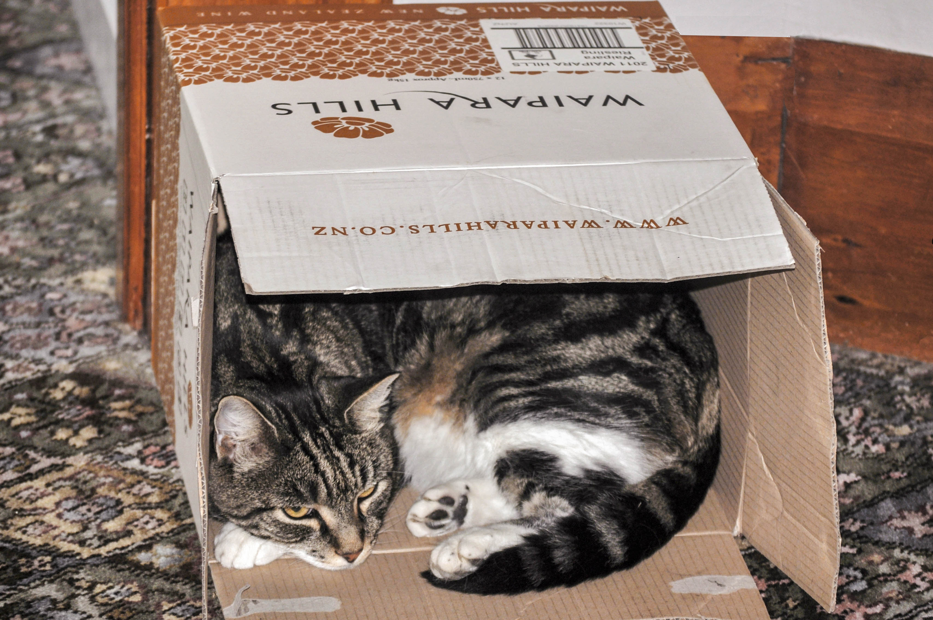 Joe our 18 yer old cat who likes to live in boxes